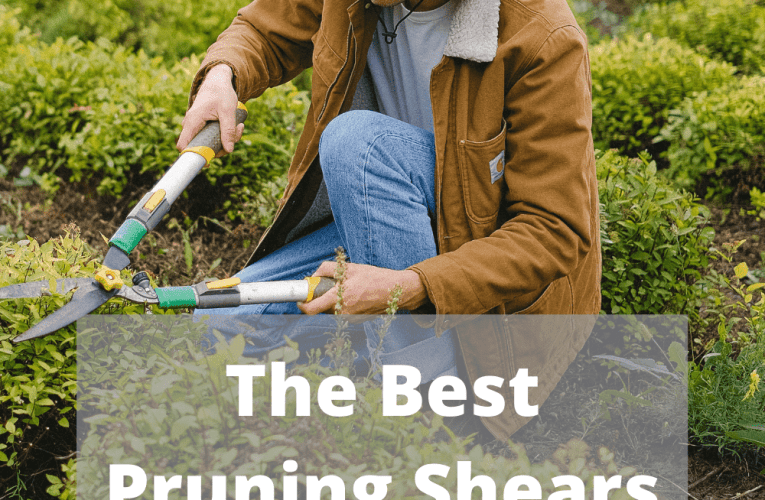 What Are the very best Pruning Shears for Your Garden?
