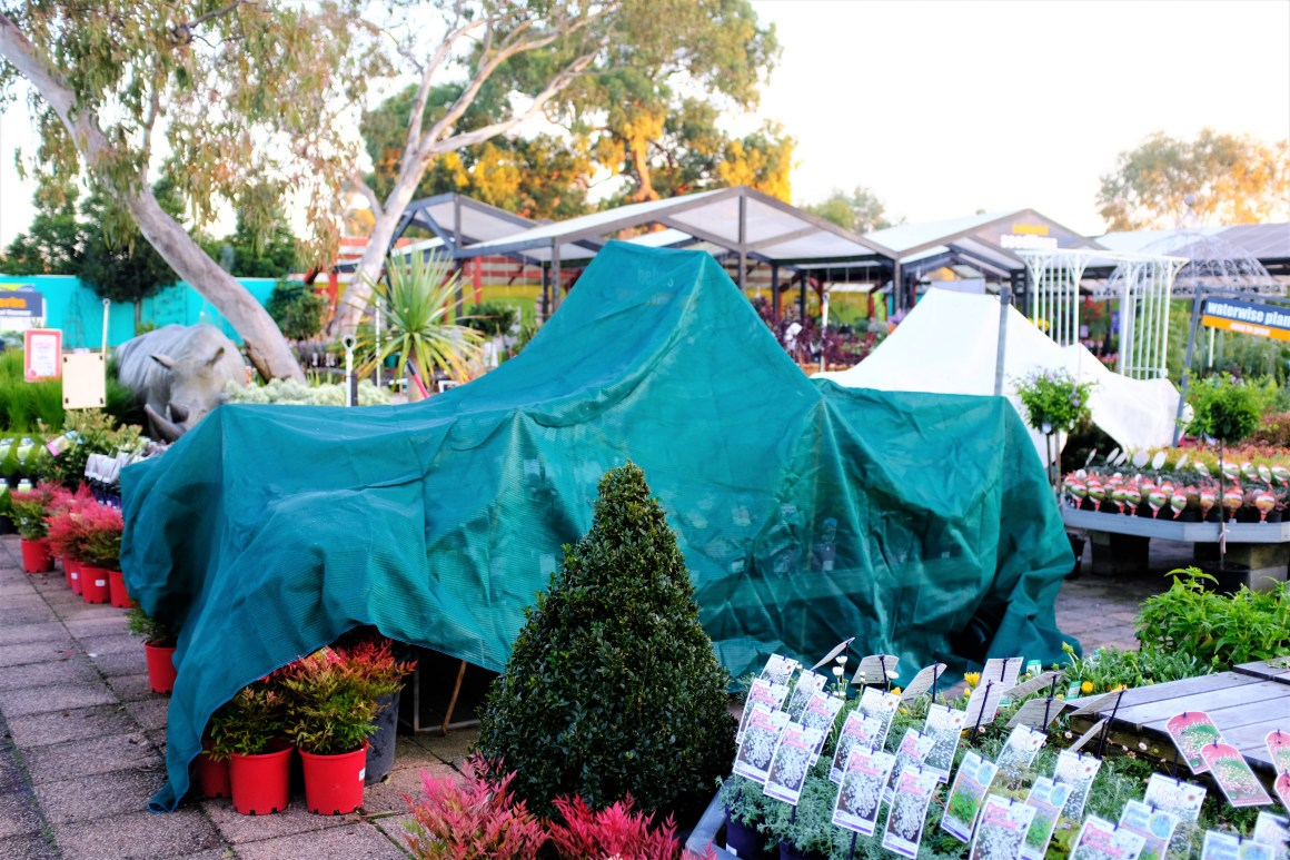 how to prevent frost damage on plants