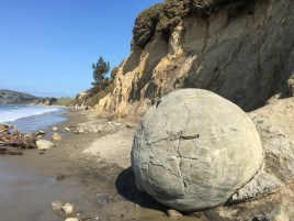 Moeraki boulders are shaped by the wind and sea and are completely hollow.