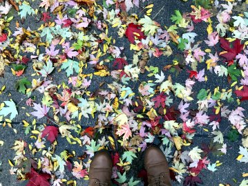 There were more colorful fall leaves on the ground than there were on the trees when I arrived in the blustery Windy City.