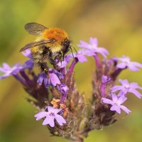 Favourite Insect Friendly Flowers and Plants - September