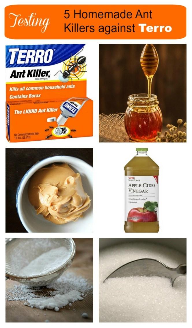 Image Titled Kill Carpenter Ants Step 1