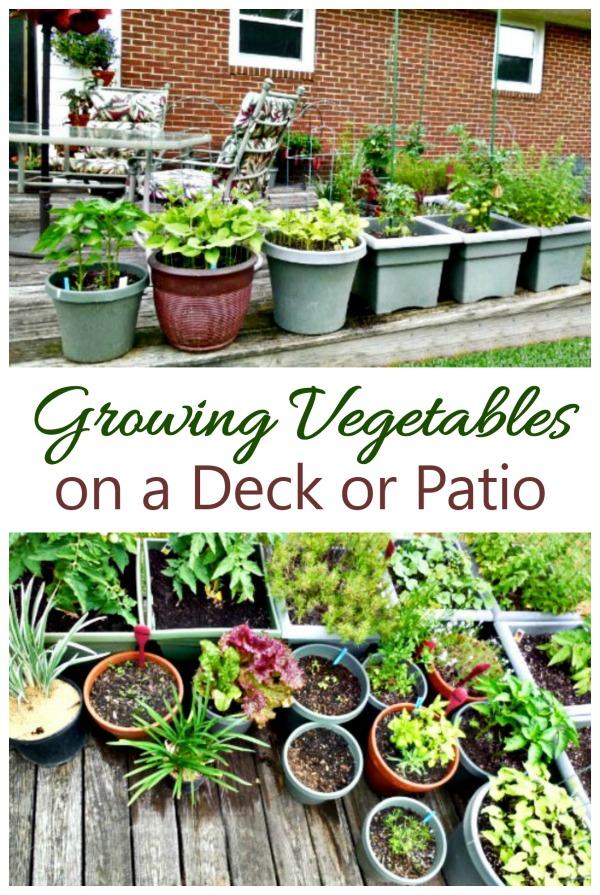 small deck garden