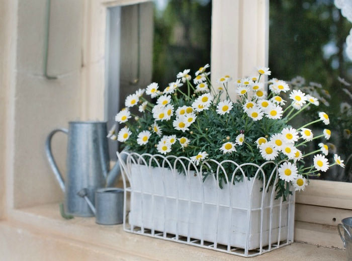 Window Box Planters How To Plant Window Boxes