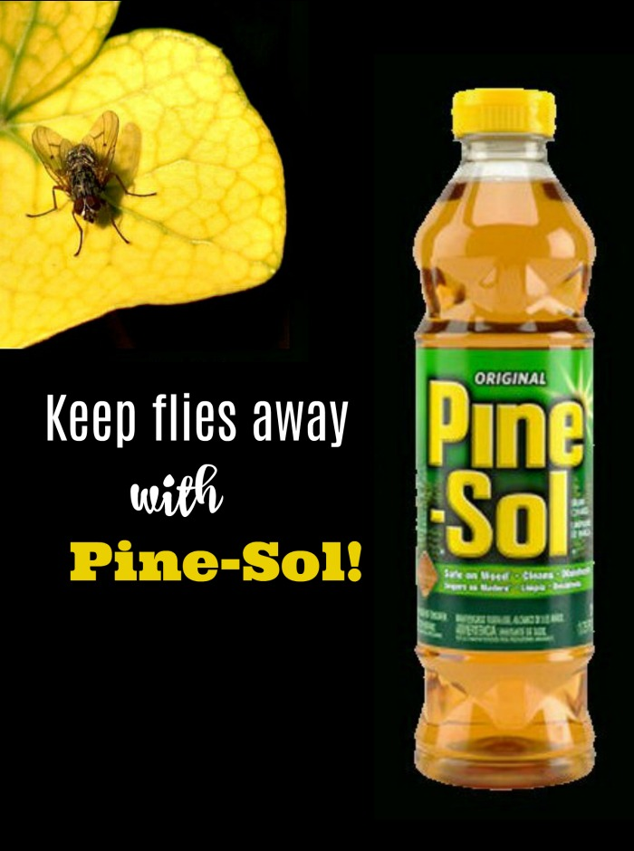 homemade fly repellent with pine sol