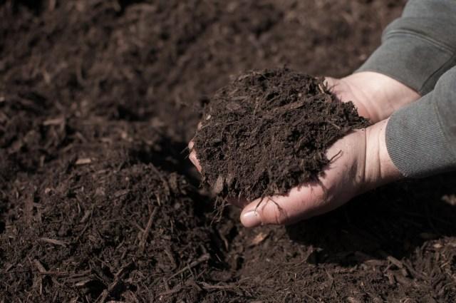 garden mulch 1