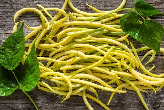 harvest wax beans