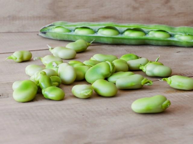 lima beans plant