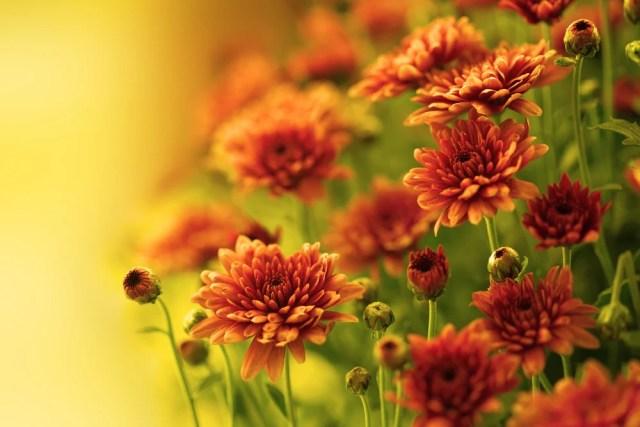 Best Fall Flowers