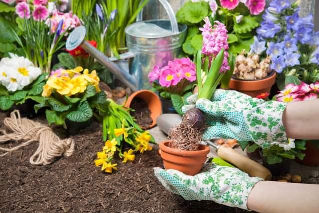 hyacinth fertilizer