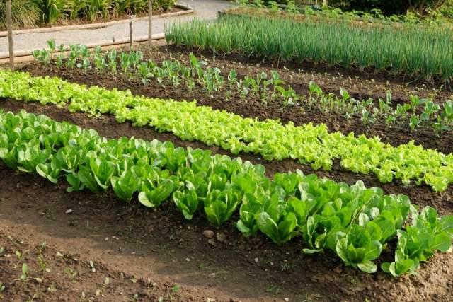 best fall garden vegetables