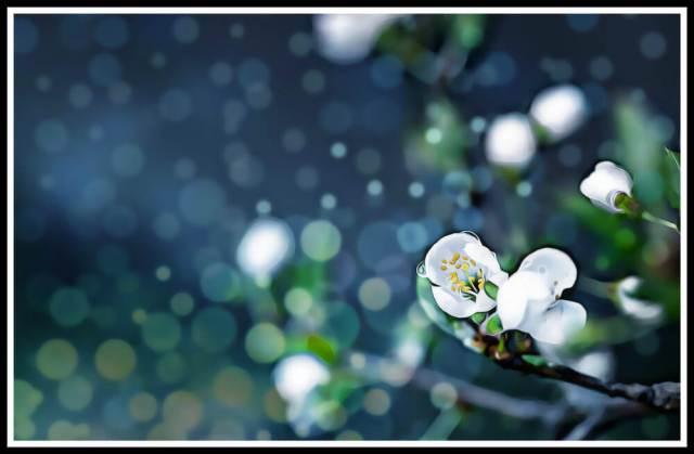 watering snowflakes