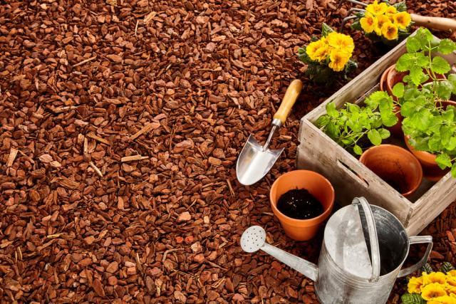 garden mulch - most common gardening mistakes
