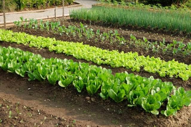 garden spacing - most common gardening mistakes