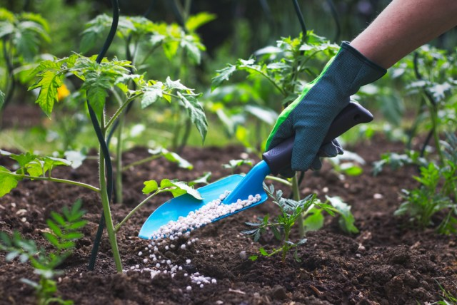 best pepper fertilizers