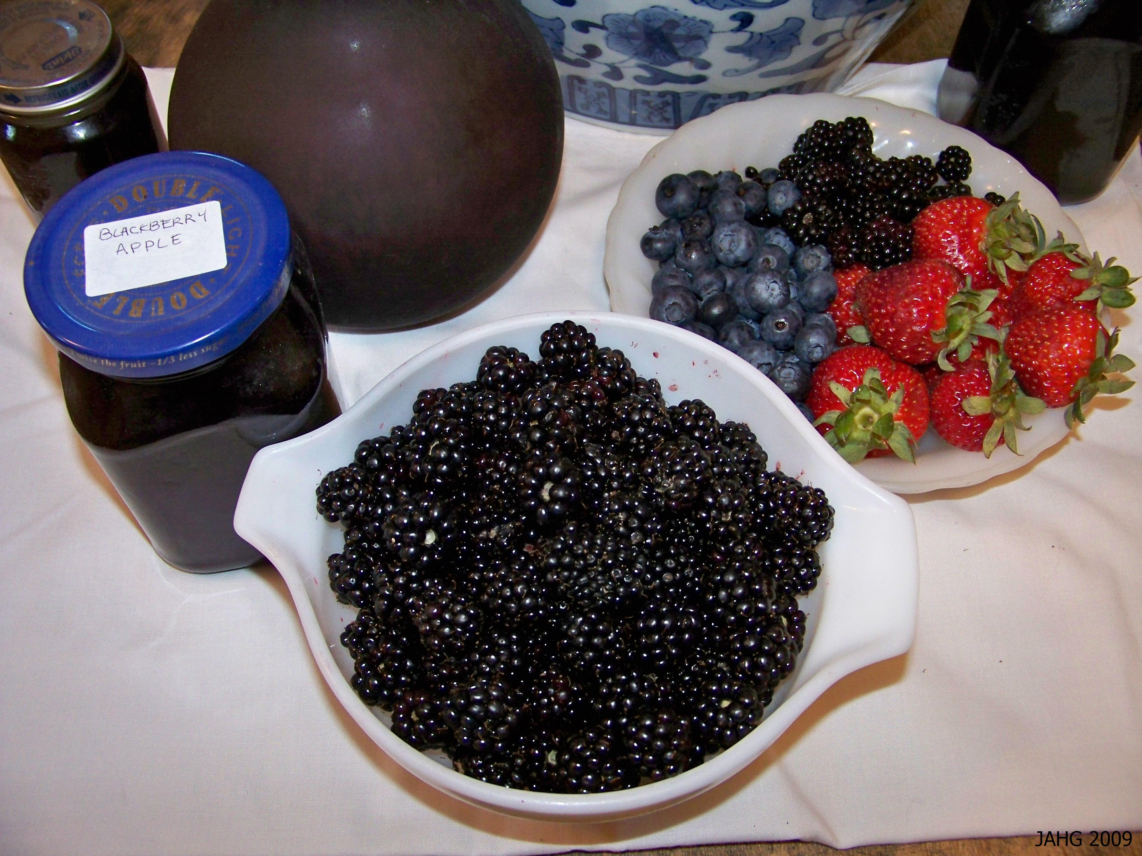 A few minutes of picking Armenian Blackberries will produce enough for a delicious dessert.