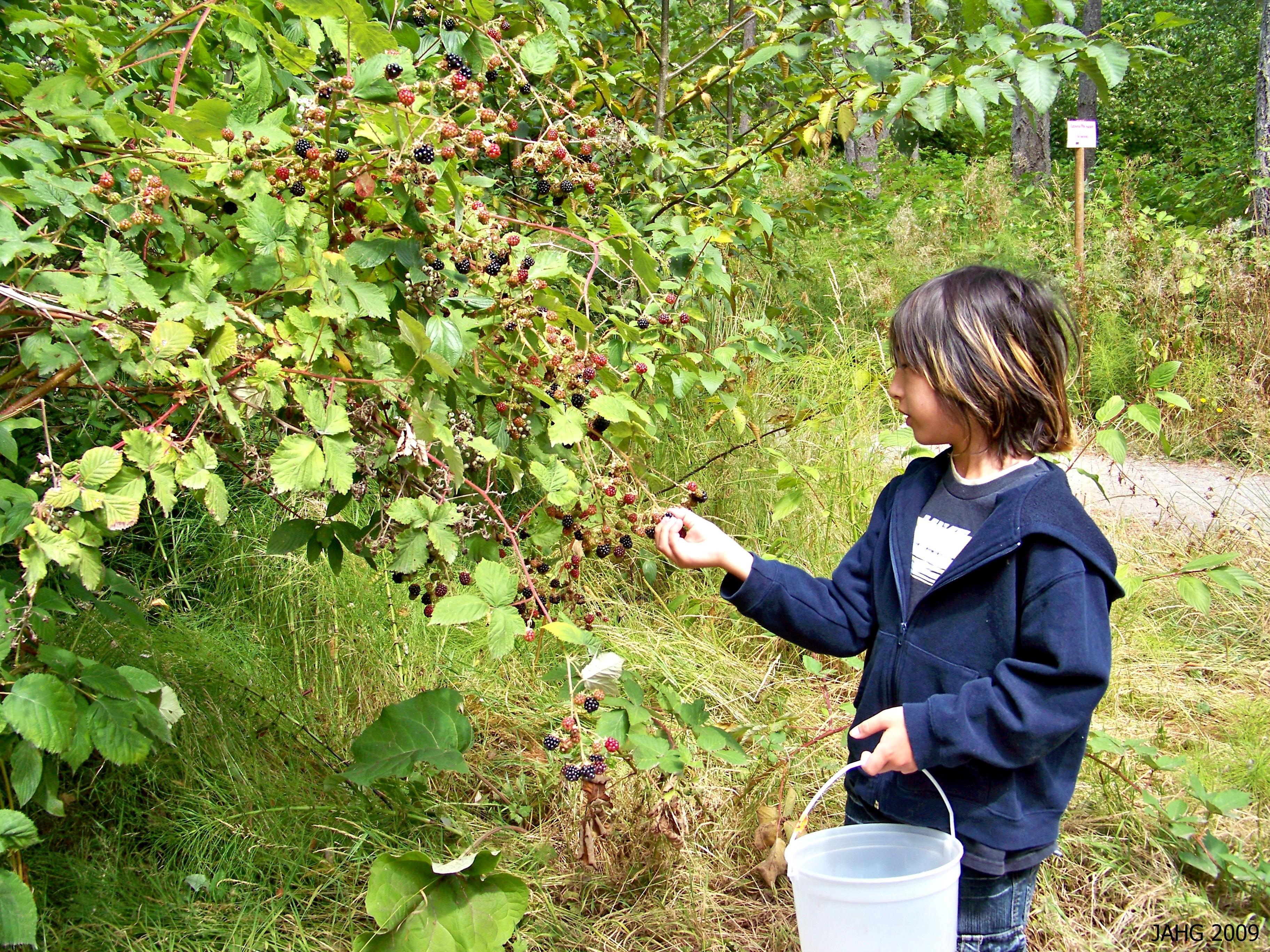My nephew Owen picking Armenian Blackberries.