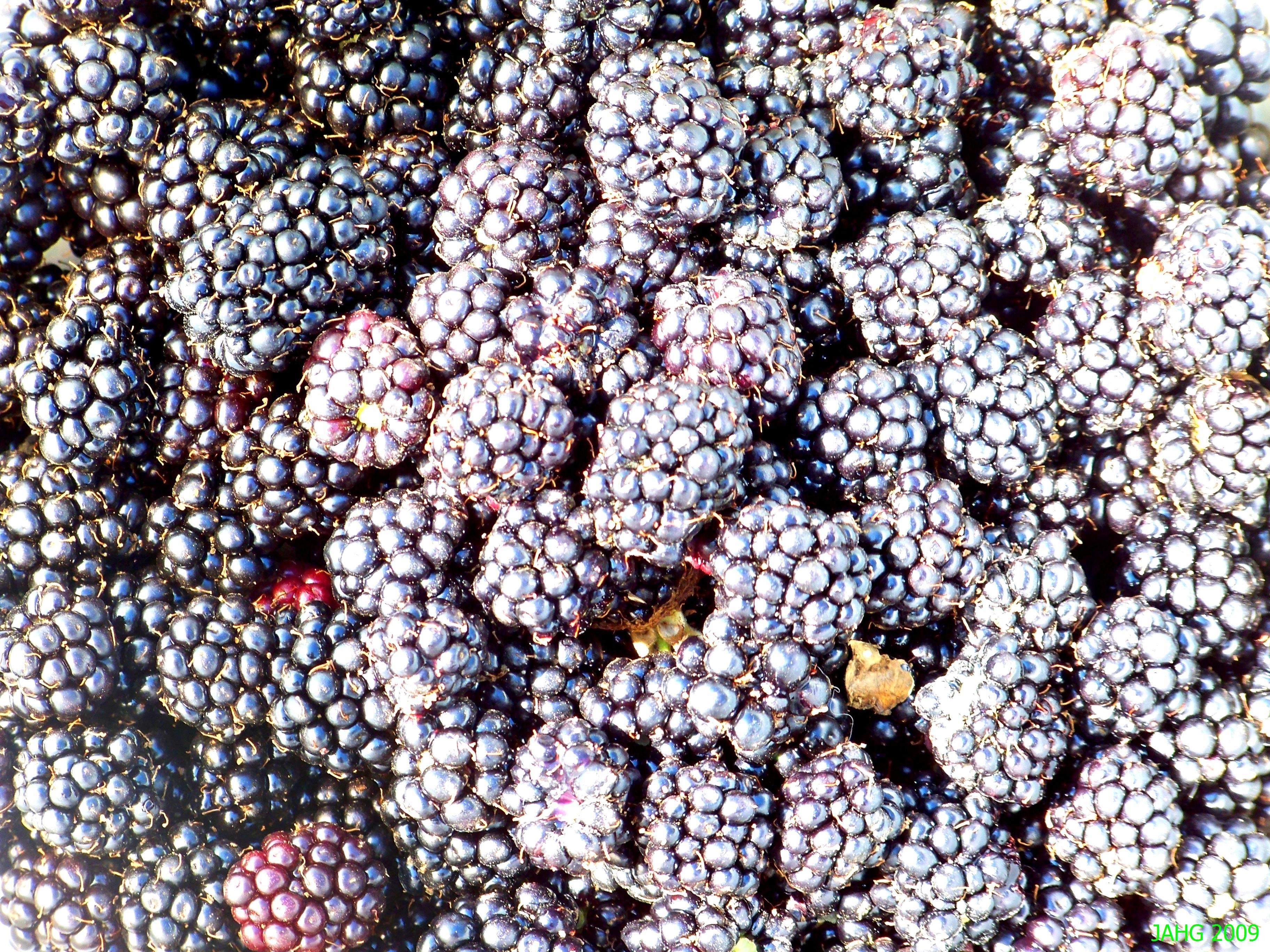East Coast or West Coast We all Love Blackberries.