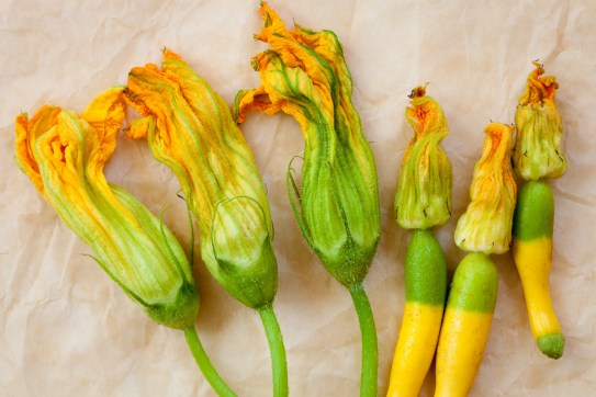 Torchio Pasta with Squash Blossoms-2