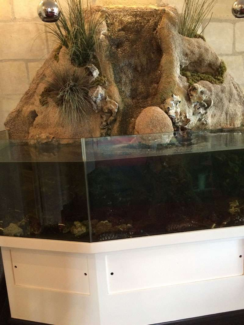The fish tank in the restaurant