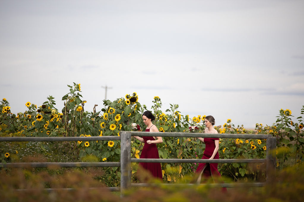 Burgundy bridesmaids dresses on these two ladies are the perfect contrast to the bright yellow sunflowers in the background of this farm wedding. www.thegathered.ca