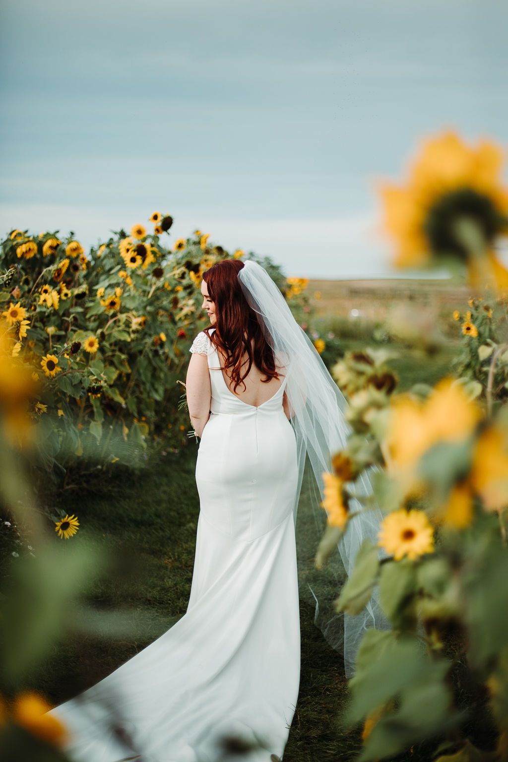 the back of a bride in a classic wedding dress and veil while she stands on a grassy path surrounded by yellow sunflowers. www.thegathered.ca