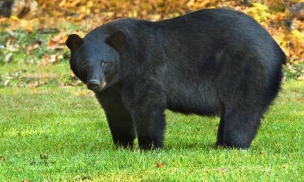 Hancock/Harrison CFWA Black Bear Workshop