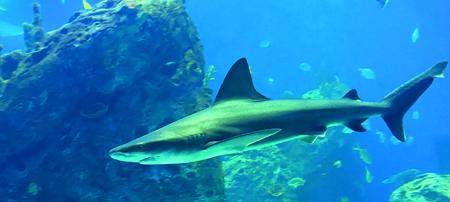 "Mississippi Aquarium Hosted ""Shark Week"""
