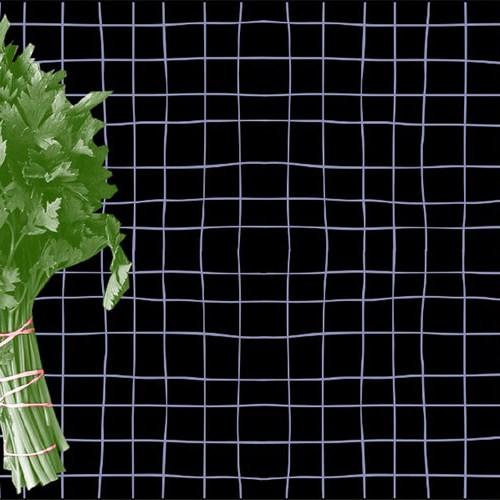 el cilantro según The Gelatina blog