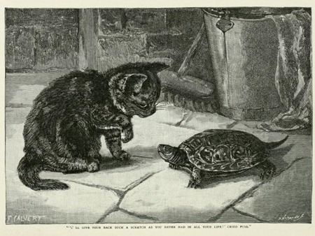 THE GEM 25 MARCH 2017 : And the turtles, of course…all the turtles are free, as turtles and, maybe, all creatures should be. | THE OLD PROVERBIAL RECOVERY