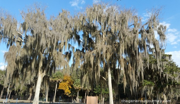 Spanish Moss © Paul H. Byerly