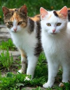 I love cats, too!