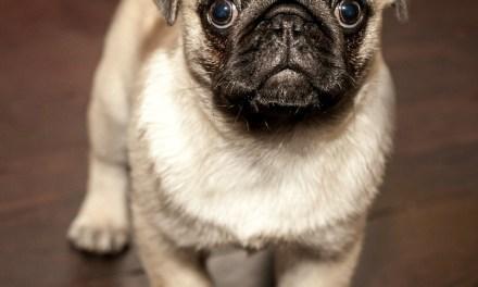 Victoria Is Bonita Springs Dog-Sitter, Cat-Sitter, Dog Walker