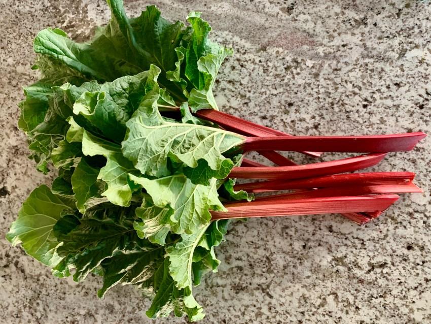Rhubarb Time