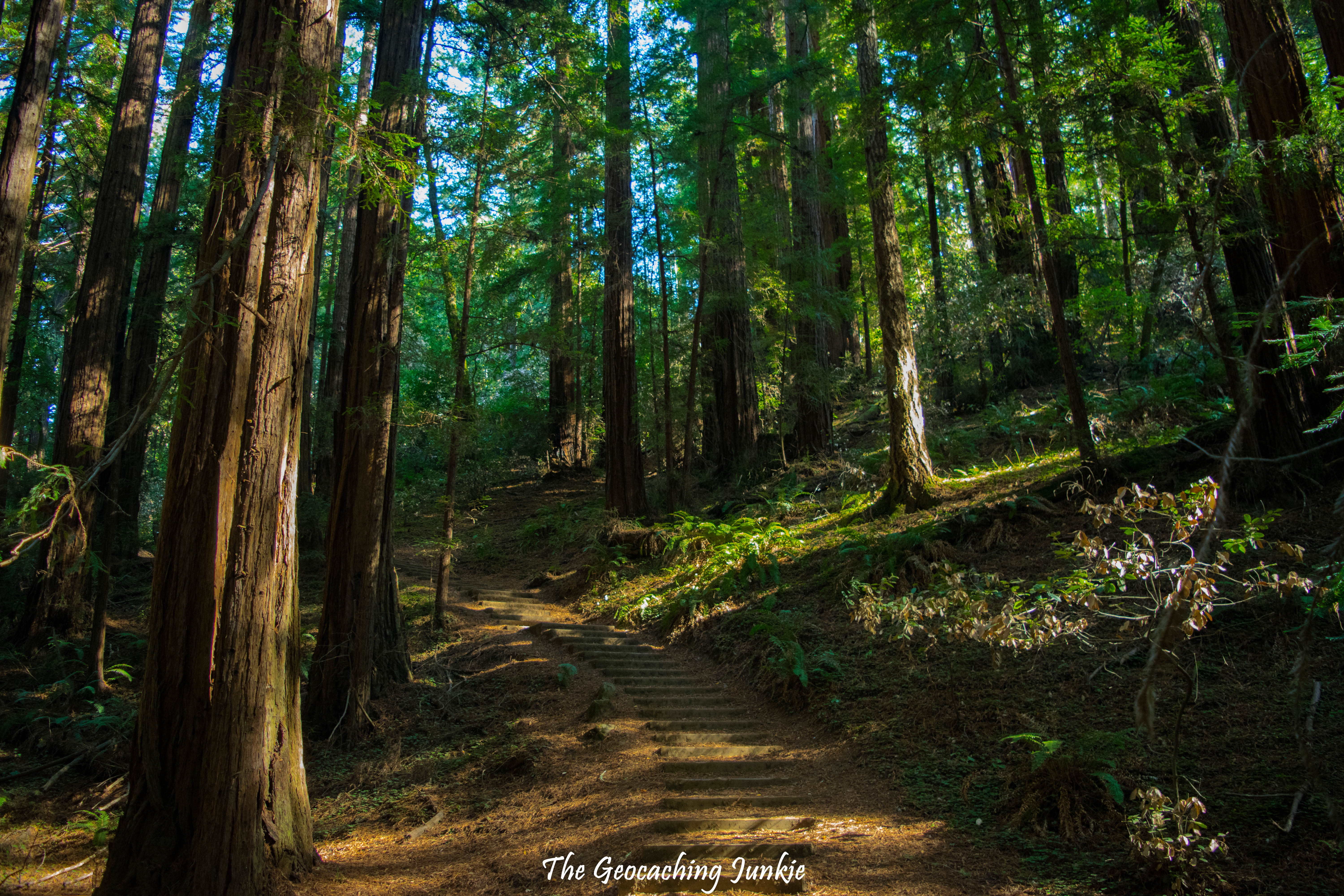 Muir Woods Is Calling And You Must Go The Geocaching