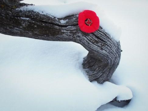 Poppy on weathered wood