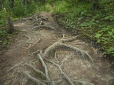 Sherbrooke-Lake-Trail