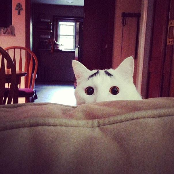 enteresan işaretli kedi