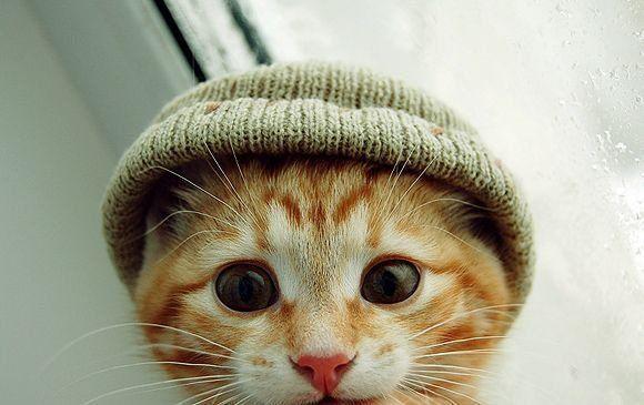 Şapkalı Kedi