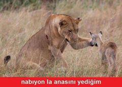 aslan caps