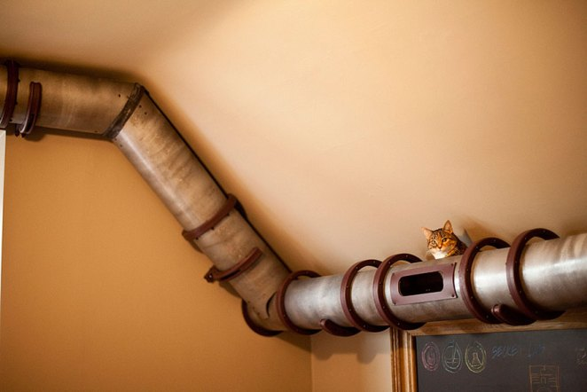 kedi borusu