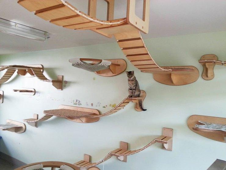 kedi oyun alanı