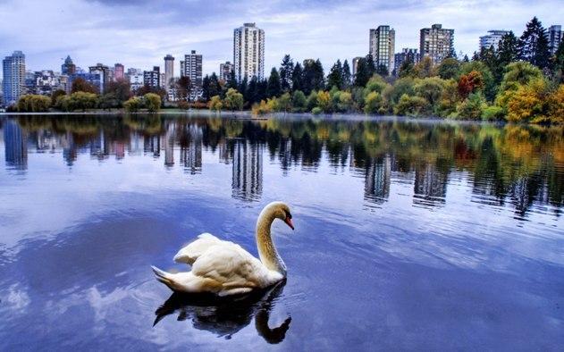 Güzel havuz ördek manzarası