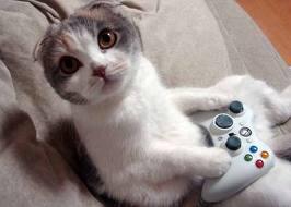 oyun oynayan kedi