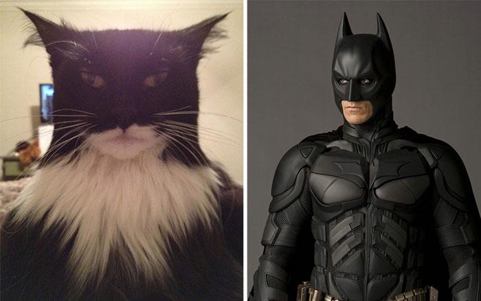 Batman Kedi