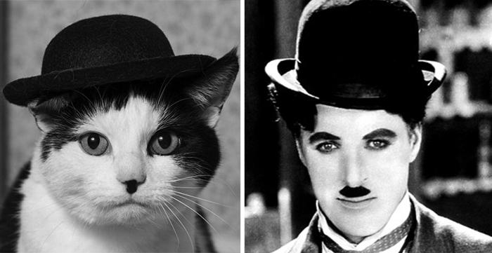Chaplin'e benzeyen kedi