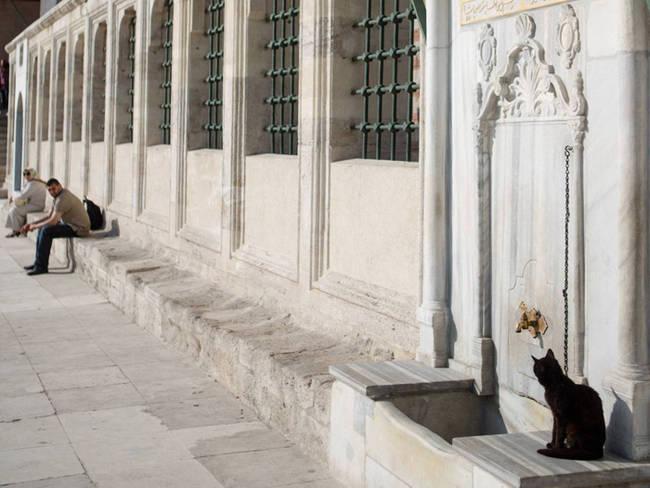 Fatih Camii Kedi