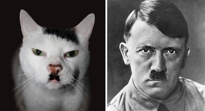 Hitler'e benzeyen kedi