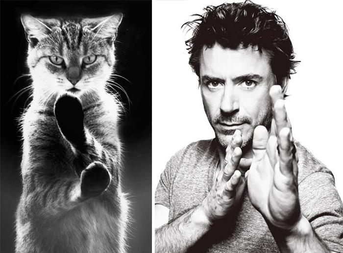 Iron Man'e benzeyen kedi