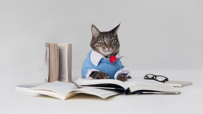 öğrenci kedi